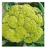 4000 C.ca Semi Cavolfiore Verde di Macerata Medio Precoce - Brassica Oleracea - In Confezione Originale - Prodotto in Italia - Cavolfiori - CF001