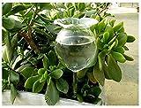 ELEBOX Self Watering Aqua Globes Hand-Blown Clear Glass Balls Mini Automatic Plant Waterer Self Watering Bulbs Flower Decorative,Set of 2pcs