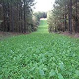 Outsidepride Sweet Spot Southern Deer Foot Plot Seed - 20 LBS