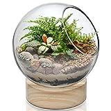 """CYS EXCEL Glass Terrarium Bubble Bowl with Wood Base (H:8"""" W:6.5"""")   Unique Fish Bowl Aquarium with Wooden Stand   Plant Terrarium Bubble Dome   Candy Bowl Storage Container"""