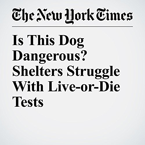 Is This Dog Dangerous? Shelters Struggle With Live-or-Die Tests copertina