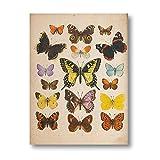 CNHNWJ Mariposas Vintage Póster y Impresiones Insectos Antigüedades Ilustración Pared Arte Lienzo Pintura Cuadros para Salon Habitación Hogar Decoracion (40x60cmx1 / no Marco)