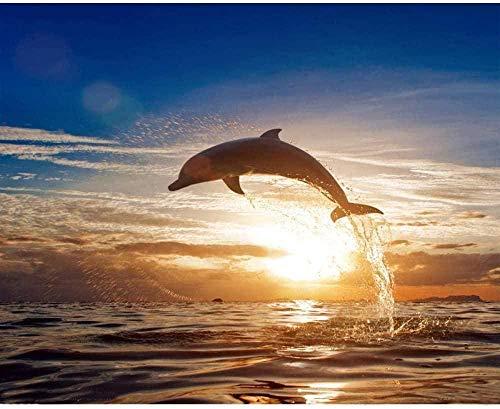 JCILZX Malen nach Zahlen Kits Sonne und Delphin DIY Gemälde auf Leinwand mit Acrylölgemälde für Kinder & Erwachsene Kit Stress weniger 40X50cm ungerahmt