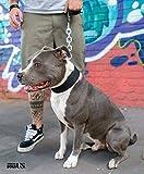 StrongDogsUS Duke 0702 (61, Negro) Collar Perro Collar Nylon Estable y Resistente