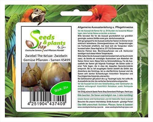 Stk - 25x Zwiebel The Kelsae- Zwiebeln Gemüse Pflanzen - Samen KS499 - Seeds Plants Shop Samenbank Pfullingen Patrik Ipsa
