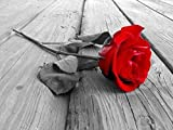 Stamped Cross Stitch Kits Beginners Embroidery-Retro Black and White red Rose-DIY Cross Stitching Supplies Needlepoint Handicraft Gift for Home Decor-16x20 inch (11CT Pre Printed Canvas)