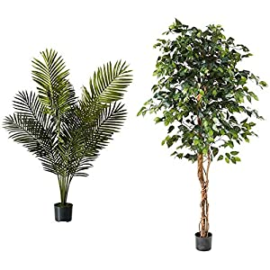 Silk Flower Arrangements Nearly Natural 5ft. Paradise Palm Artificial Plant, 46x44x60, Green & 6ft. Ficus Artificial Trees, 72in, Green