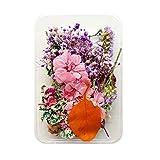TopHGC Veri fiori secchi pressati e foglie, fiori secchi naturali misti, foglie di margherite, ortensie per creazione di gioielli, riempimento di stampi in resina epossidica