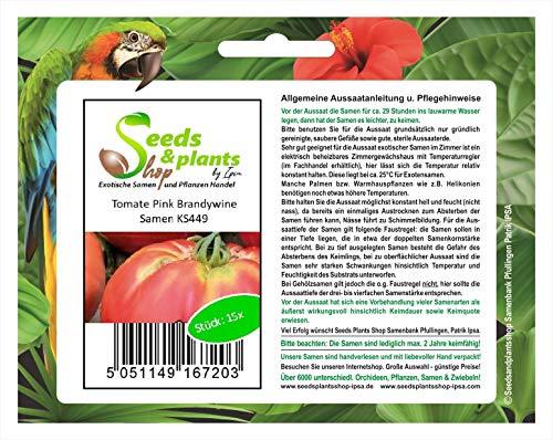 Stk - 15x Tomate Pink Brandywine - Alte Sorten Samen Gemüse Garten KS449 - Seeds Plants Shop Samenbank Pfullingen Patrik Ipsa