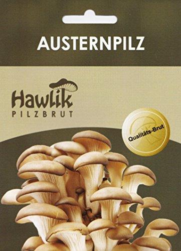 Hawlik Pilzbrut I das Original I Austernpilze als Dübel-Brut zum selber züchten - kinderleicht frische Pilze ernten