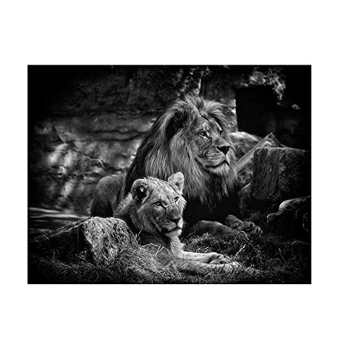 Black and white two lions prairie animals oil painting on canvas poster prints art pictures on the wall decorate the living room