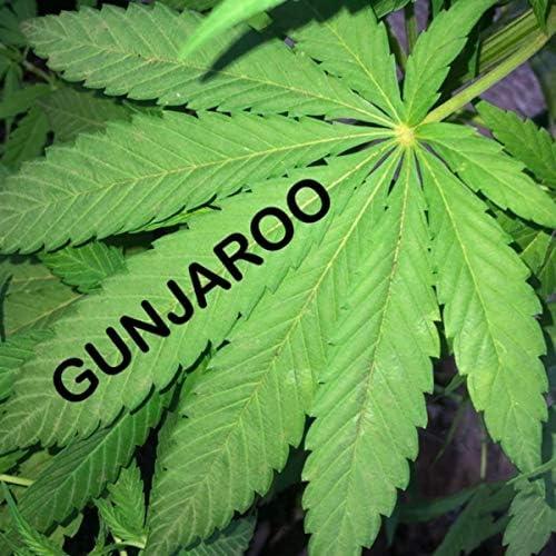 Gunjaroo