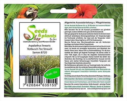 Stk - 10x Aspalathus linearis Rotbusch Tee Strauch Pflanzen - Samen B720 - Seeds Plants Shop Samenbank Pfullingen Patrik Ipsa