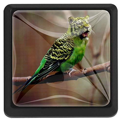 Imprime Budgie Tiger Parakeet Photoshop Rectángulo para decoraciones del hogar Perillas Tiradores del cajón Manija con tornillos Lindo juego de 3
