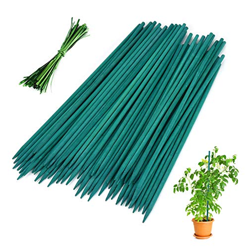 1000 bamboo stakes - 6