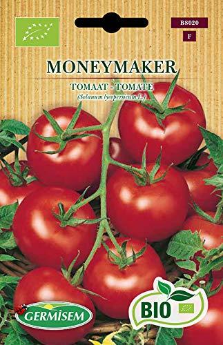 Germisem Tomate MONEYMAKER
