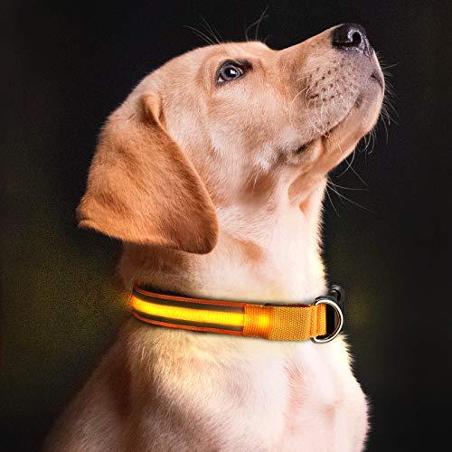 Winne - Collar LED para perro con luz LED, 3 modos de parpadeo, brilla en la oscuridad, mejora la seguridad y visibilidad de tu mascota en la noche.