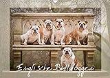 Englische Bulldoggen (Wandkalender 2021 DIN A3 quer)
