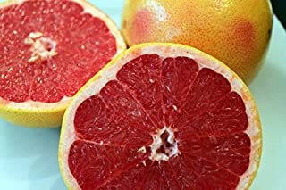 grapefruit ruby red tree