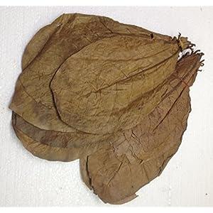 garnelenshop24de-ca50-XL-Seemandelbaumbltter-100-Gramm--Prime-CATAPPA-Leaves--100-Wirkstoffe-Dank-natrlicher-Verarbeitung--Gesundes-Wasser-im-Aquarium