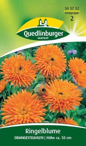 Ringelblume, Orangestrahlen
