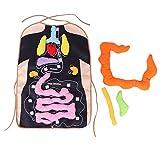 Hztyyier Delantal de órganos Delantal de Felpa Delantal de anatomía para niños Delantal fisiológico para niños Órgano del Cuerpo Humano Juguete de sensibilización