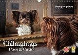 Chihuahuas - Cool and Cute (Wandkalender 2020 DIN A3 quer): Wer ungewöhnliche Hundebilder liebt ist hier richtig. (Monatskalender, 14 Seiten ) (CALVENDO Tiere)