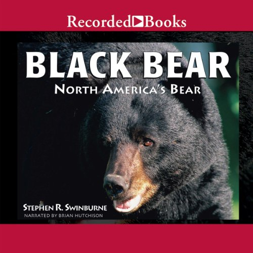 Black Bear audiobook cover art