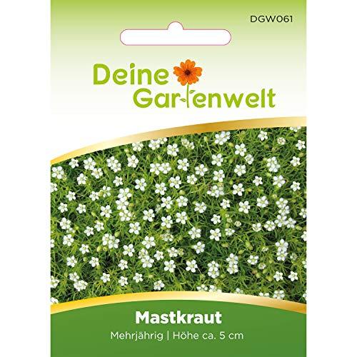 Deine Gartenwelt -  Sternmoos Mastkraut