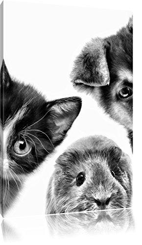 Hond Kat trio caviaFoto Canvas | Maat: 80x60 cm | Wanddecoraties | Kunstdruk | Volledig gemonteerd