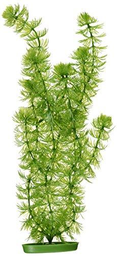 Hagen Marina Planta Corne Mot 37,5 cm pp1512