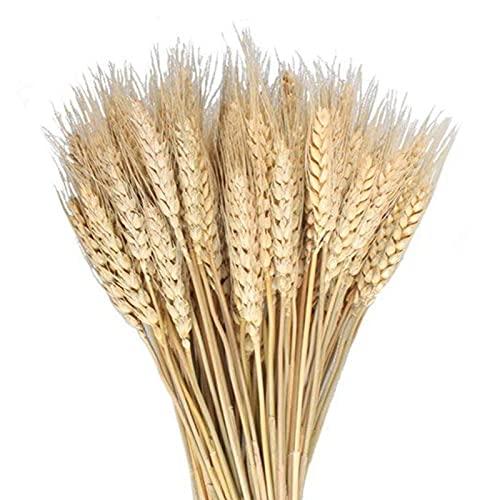 MHMJON 17.7'' 100 Pcs Dried Wheat Sheaves Bundle Golden Natural Wheat Bouquet Bunch Artifical Flowers Fall Arrangement DIY Design Home Table Wedding Party Centerpieces Decorative