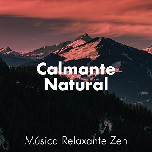 Zen Music Garden & Ethereal Destiny