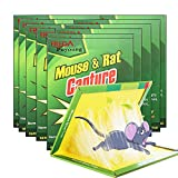 Mouse Glue Traps 10 Packs, Glue Board,Extra Large Sticky Rat Glue Traps, Peanut Butter Scented Glue Traps for Mice, Perfect Use for Indoor and Outdoor