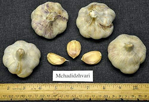 SONIRY Potato Seed - Bintje - Gelb Flesh - Ideal für Braten und Rösten - 6 Tubers