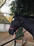 Pferdelinis William Hunter Equestrian - Cavezza a Nodo con Maglia, Imbottita sul Naso e sulla nuca, Ideale per lavori a Terra, Formazione di Cavalli, Allenamento