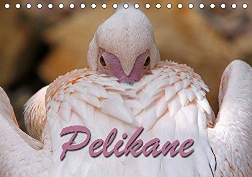 Pelikane (Tischkalender 2019 DIN A5 quer): Fischjäger in weiß und pink (Monatskalender, 14 Seiten )