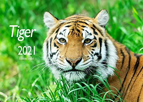 Edition Seidel Tiger Premium Kalender 2021 DIN A3 Wandkalender Tiere Natur Raubkatze