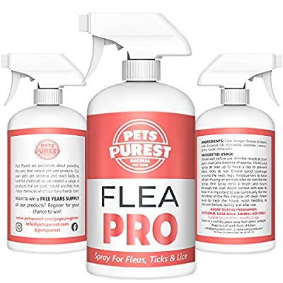 Pets Purest 100% Natural Flea Spray For Dogs (500ml) Flea Mite Tick & Lice Spray For Dogs, Cats Horses & Pets. Stop Your Pet Itching & Scratching. Cruelty Free Natural Formula No Nasty Chemicals from Pets Purest