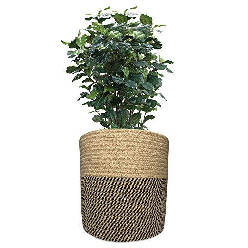 11 inch pot - 1