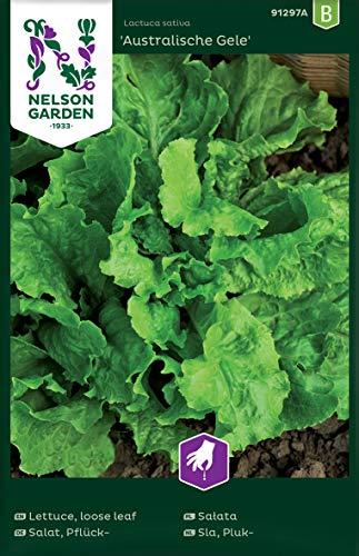 Salat Samen Australische Gele - Nelson Garden Gemüse Saatgut - Pflücksalat Samen (1200 Stück) (Einzelpackung)