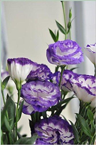 200pcs rares graines blanches Eustoma vivaces plantes à fleurs Balcon fleurs en pot Graines lisianthus pour planteur de pot de fleurs 1