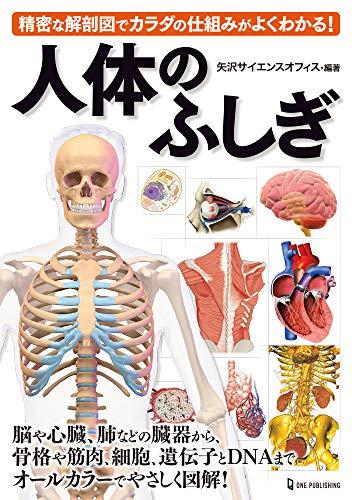 人体のふしぎの詳細を見る