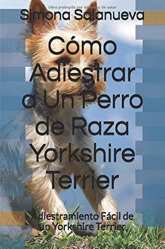 Cómo Adiestrar a Un Perro de Raza Yorkshire Terrier: Adiestramiento Fácil de un Yorkshire Terrier