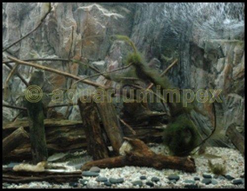 3D Aquarien Rückwand 120×60 Fels mit Wurzel - 4