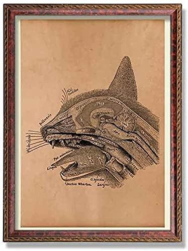 MG global - Póster de anatomía de gato - ilustración anatómica - arte de pared sin marco