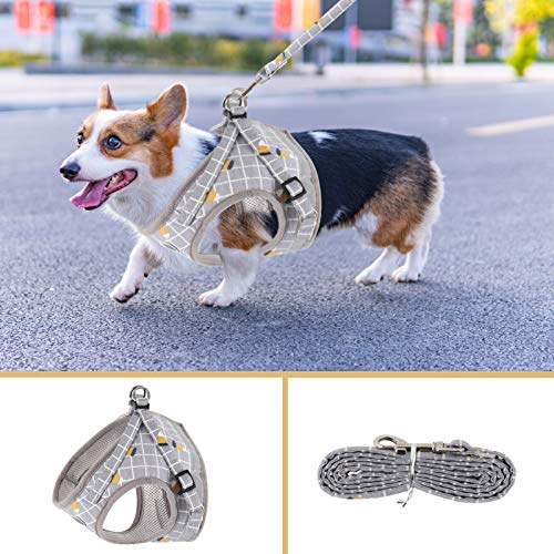 Stylish Dog Harnesses