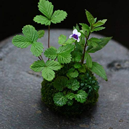 Beautiful plant with moss