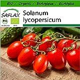 SAFLAX - Ecológico - Tomate - Roma - 15 semillas - Solanum lycopersicum