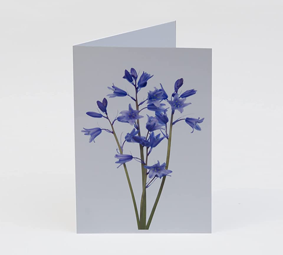 Flowerlets - Notelets – Thank you Cards - Pack of 5 with Envelopes - Bluebells - Blank Inside - Sold exclusively by AM Fine Art GB
